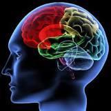 cerveau-2-1.jpg